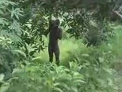 pure african unprofessional fuck on the tree loyalty 2